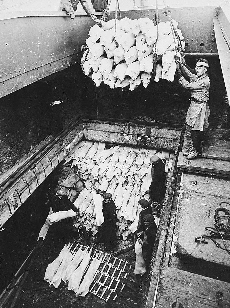 Unloading frozen pork from a refrigerated cargo ship.